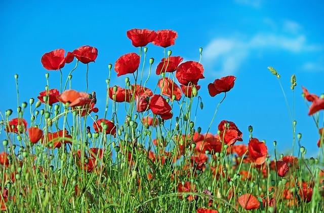 Allergique aux fleurs